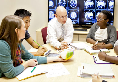 Students discussing the model of a brain with their professor