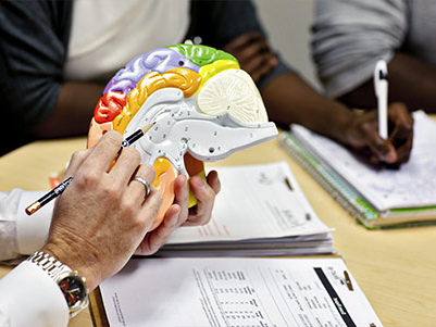 An instructor pointing to a spot on a model of the brain